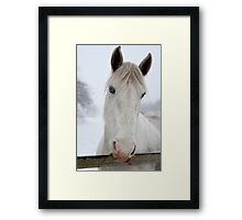 Hungry horse Framed Print
