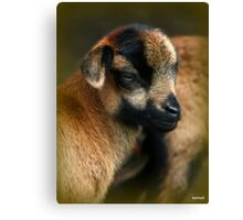 Give me a Cuddle Canvas Print