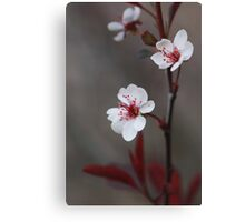 Plum Gorgeous ~ Canvas Print