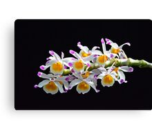 Orchid Burst Canvas Print