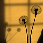 Golden Dandelions by Margie Avellino