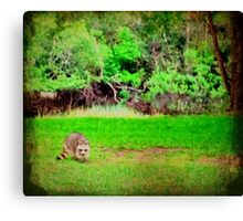 Back Forty Buddy 1 Canvas Print