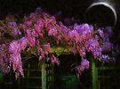 Confetti of Blossoms by RC deWinter