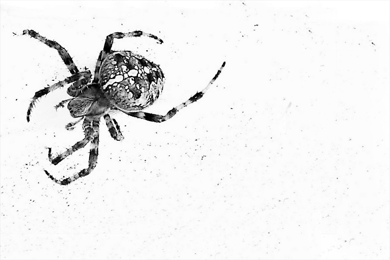 Spider No More Colour by paintingsheep