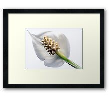 Peaceful Shades of White Framed Print