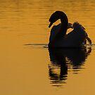Swan Light by Georden