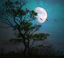 Moonlight by Susan Werby