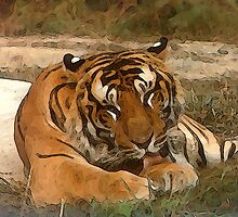 Lazy Tiger by Piero