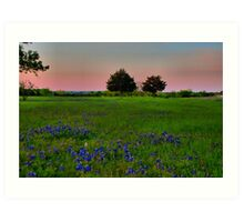 The Ultimate Attraction - Bluebonnets! Art Print