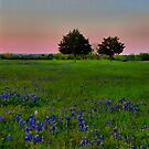 The Ultimate Attraction - Bluebonnets! by aprilann