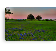 The Ultimate Attraction - Bluebonnets! Canvas Print