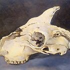 Sheep skull study by Jedika