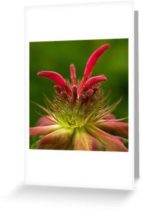Bee's Balm by Lynn Gedeon