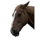 Horse by Nigel Bangert