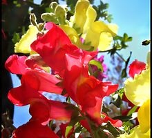 Red and Yellow Snapdragons I by BlessedbyGaia