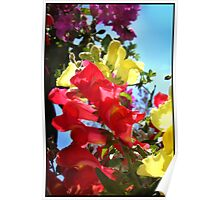 Red and Yellow Snapdragons I Poster