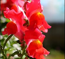 Red Snapdragons II by BlessedbyGaia