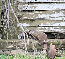 Groundhog Day aka Phil the Liar by LynyrdSky