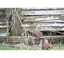 Groundhog Day aka Phil the Liar Photographic Print