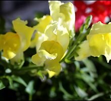 Yellow Snapdragons II by BlessedbyGaia