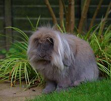 Bunny Rabbit's Garden by Matthew Ellerington