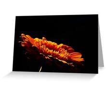 Orange Gerbera flower under lights isolated against dark background Greeting Card