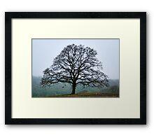 Tree In The Mist Framed Print