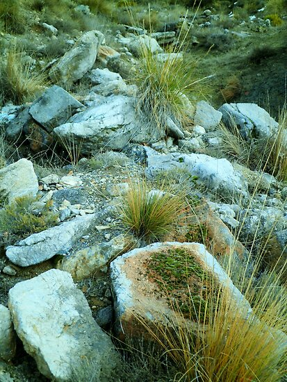 Rocks and Grass by indiemod