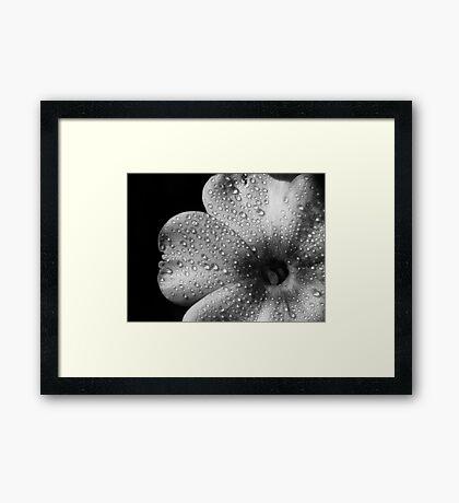 Phlox 1 B&W Framed Print