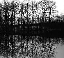 The Grove by Varinia   - Globalphotos