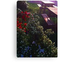 Bursting Flowers by Wooden Benches Canvas Print