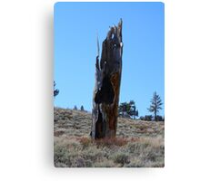Old,Withered,Burnt Out Tree,Peavine Mountain,Reno NV USA Canvas Print