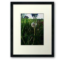 The Dandelion's Wish of Perhaps Framed Print