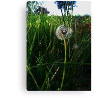 The Dandelion's Wish of Perhaps Canvas Print
