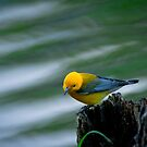 Prothonotary Warbler By The Lake by Joe Jennelle