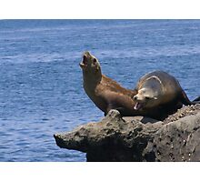 CHATTING SEA LIONS Photographic Print