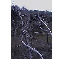 Skeleton Trees Photographic Print