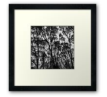 Forest Silhouette Framed Print