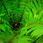 Fern Center by Marian Grayson
