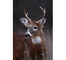 Deer boy - White-tailed Deer Photographic Print