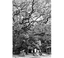 Sumiyoshi Shrine Photographic Print