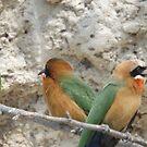 White fronted Bee-eaters by Pauline Adair