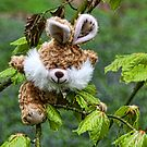 Who Says Rabbits Can&#x27;t Climb Trees by lynn carter