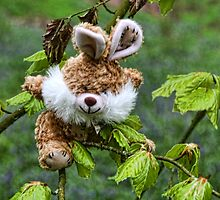 Who Says Rabbits Can't Climb Trees by lynn carter