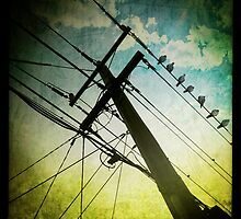 Birds on a Wire by vinpez