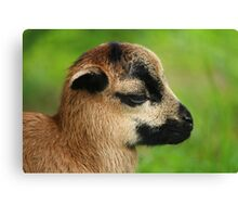 A Ball of Wool Canvas Print