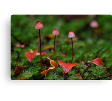 The little Red Ones Canvas Print