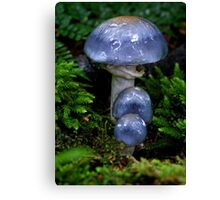 The not so little Blue Ones Canvas Print