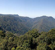 Dorrigo National Park Panorama by Adrian Paul