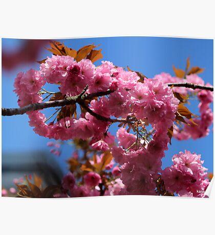 Chinese Cherry Tree Poster